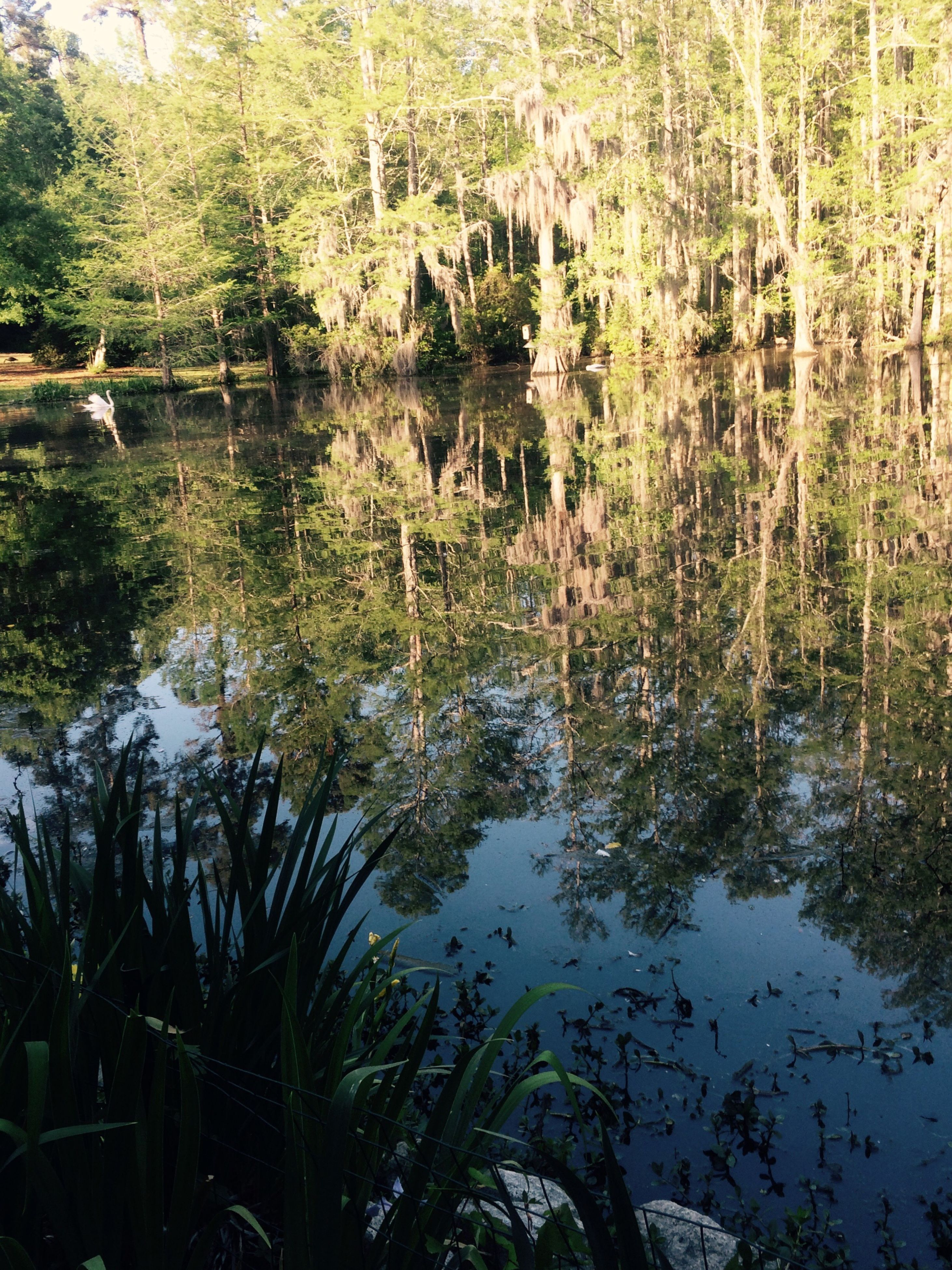 water, nature, reflection, tree, forest, lake, plant, growth, day, outdoors, no people, beauty in nature, grass