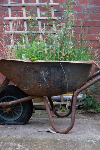 Gardening Grass Plant Life Planting Plants Transport Transportation Urban Gardening Urban Gardens Wheelbarrow Garden Garden Photography Grass Grass Area Nature Old Wheelbarrow Plant Plant Photography Plants And Flowers Rusty Transportation Urban Urban Garden