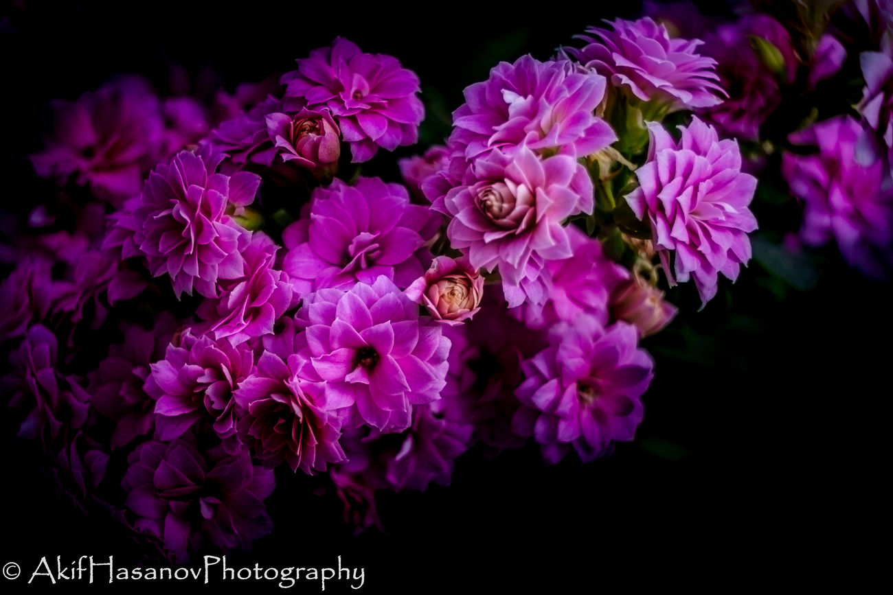 Beauty In Nature Blooming Close-up Flower Flower Head Fragility Freshness Growth Kalanchoe Nature Petal Purple