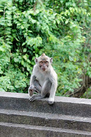 Little Monkey Taking Photos Bestshot Cute Animal Inbali INDONESIA Trip Photo Check This Out Enjoying Life EyeEm Bali, Indonesia Travel Photography BestTripEver Hello World