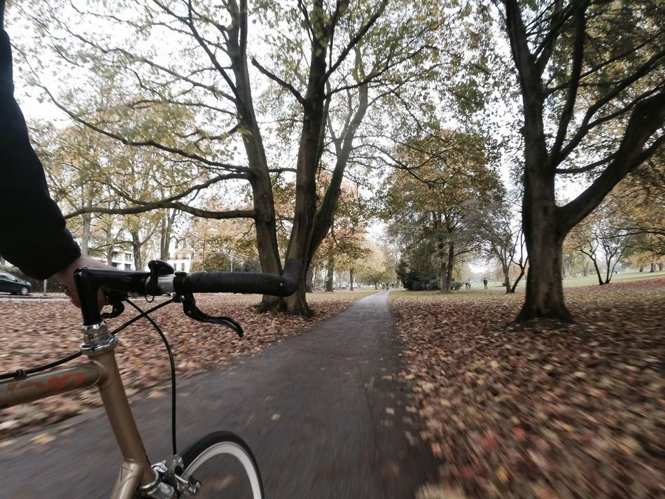 Tree Road Transportation Park Bench Outdoors Bike Bike Ride Bike Tour Bicycle Bicycle Trip Fahrrad Fixie Fixed Fixedgear Fixed Gear Singlespeed SingleSpeed Bike Autumn Alster Hamburg Gopro