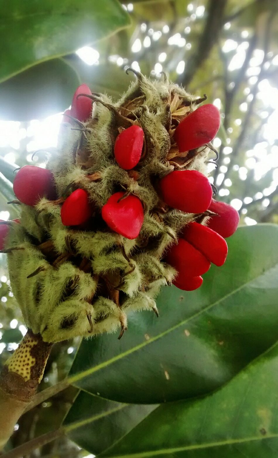 Seeds Trees Nature Red Magnolia Campus Daily Ride Biking Quick Pic End Of Summer