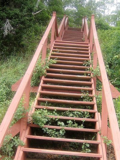 Tall Wooden Stairs Stairs In Woods Overgrown Bushes Looking Up Stairs EyeEmNewHere Steps Steps And Staircases Staircase Day Outdoors Growth The Way Forward