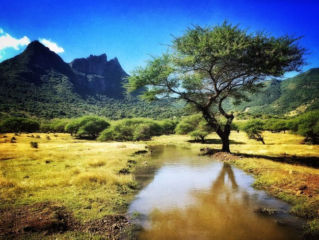 Savannah Scenery Landscape_Collection Travel Photography EyeEm Nature Lover Mauritius Tree_collection  Iphoneonly