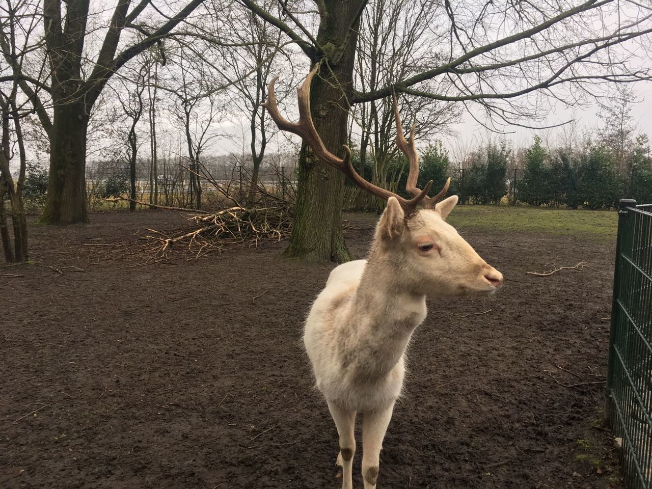 Tree Animal Themes One Animal Mammal Domestic Animals Nature No People Landscape Day Outdoors Animal Animal_collection Animal Photography Winter Time Deer No Filter, No Edit, Just Photography Smartphonephotography Nature On Your Doorstep Nature_collection Animals In The Wild Winter Photography Nature Reserve Nature Proud Deers Nature Beauty Peace