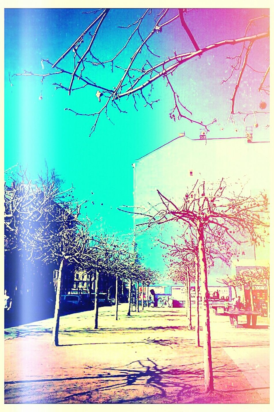 Walking Around Streetphotography Nature Sky Landscape Enjoying The Sun On The Road Blue Building Pink Urban Nature