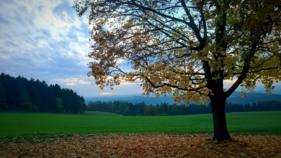 Autumn at the Black Forest Tree Nature No People Sky Landscape Beauty In Nature Outdoors Day Evening Sky Autumn Oberjessingen Autumn Colors
