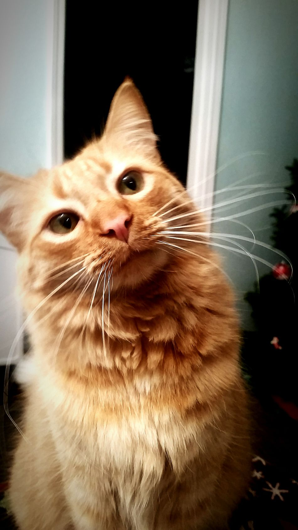 Pets Domestic Cat Domestic Animals Mammal One Animal Animal Themes Looking At Camera Feline Indoors  Portrait Close-up No People Day Nature Shadow Single Object Table Not A Horse