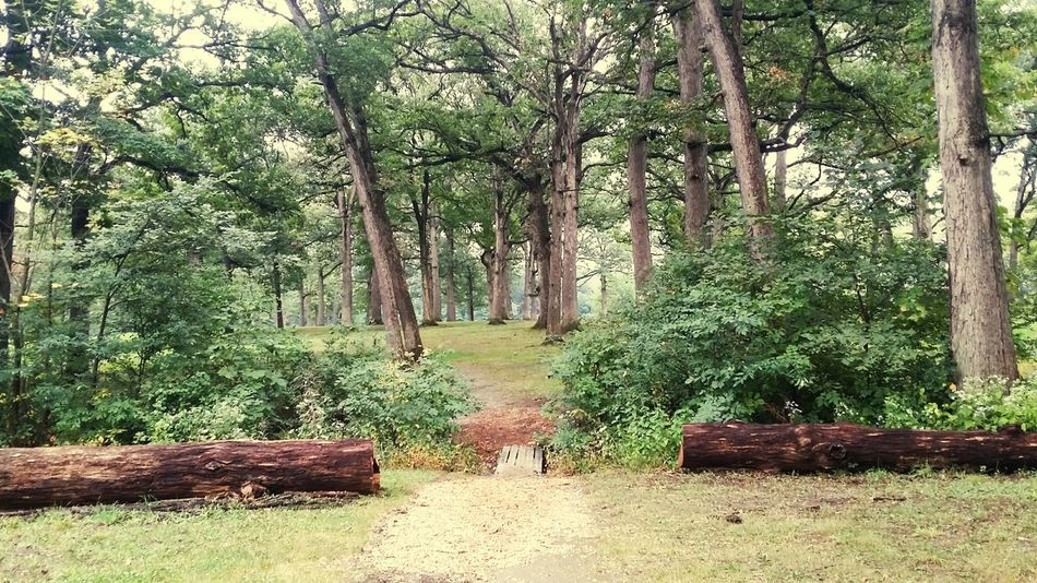 Disc Golf Frolfing Oaks Mokena Environment Nature Trees In The Forest Innova Frisbeegolf