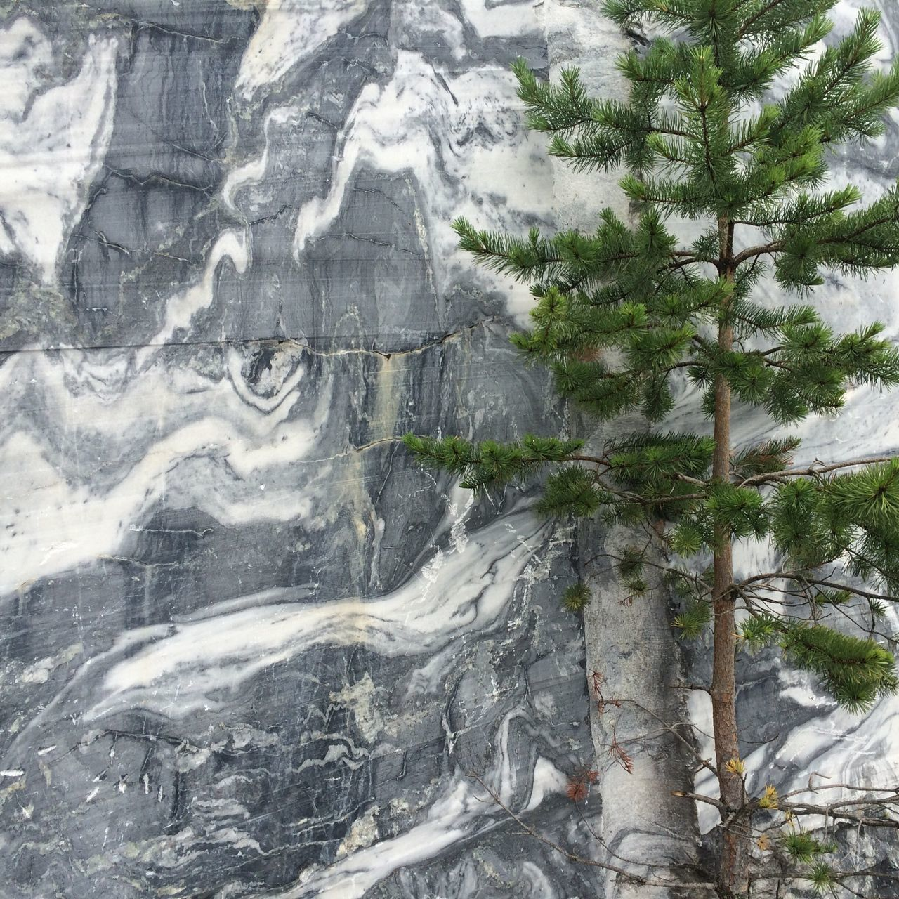 Nature Ruskeala Marble Canyon Marble Tree