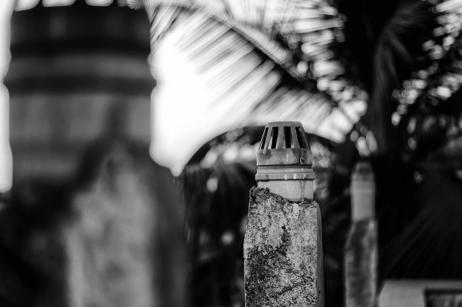 Close-up No People Black & White Photography Outdoors Sony Alpha 58 Black & White B&WPhoto