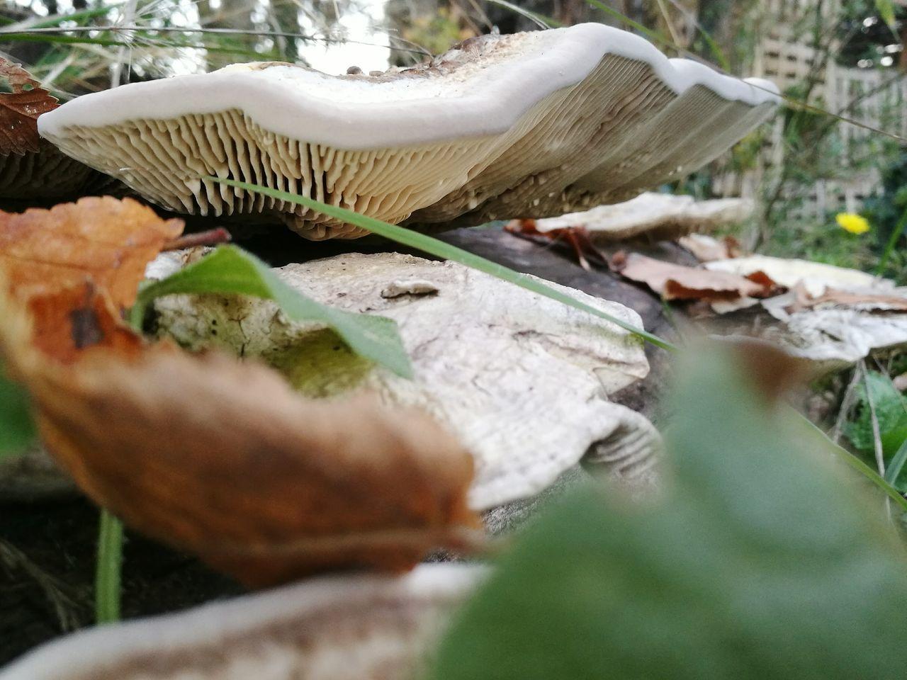 Nature champignon Champignon
