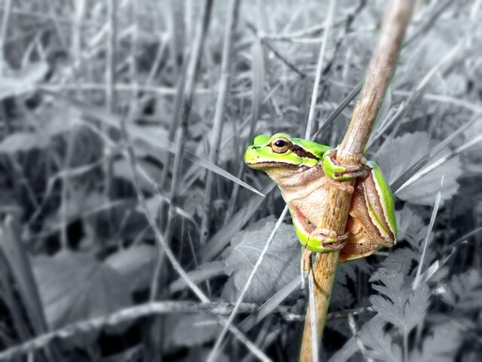 Animals Nature Blackandwhite Photography