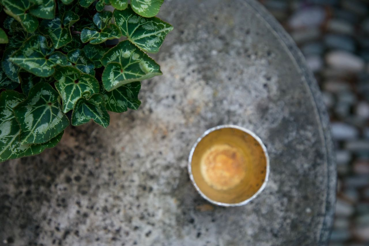 garden table Close-up Coffee Cup Cups Day Daylight Food And Drink Freshness Garden Gold Green Grey High Angle View Leaf Leaves Mug No People Outdoors Plant Stone Stones Table