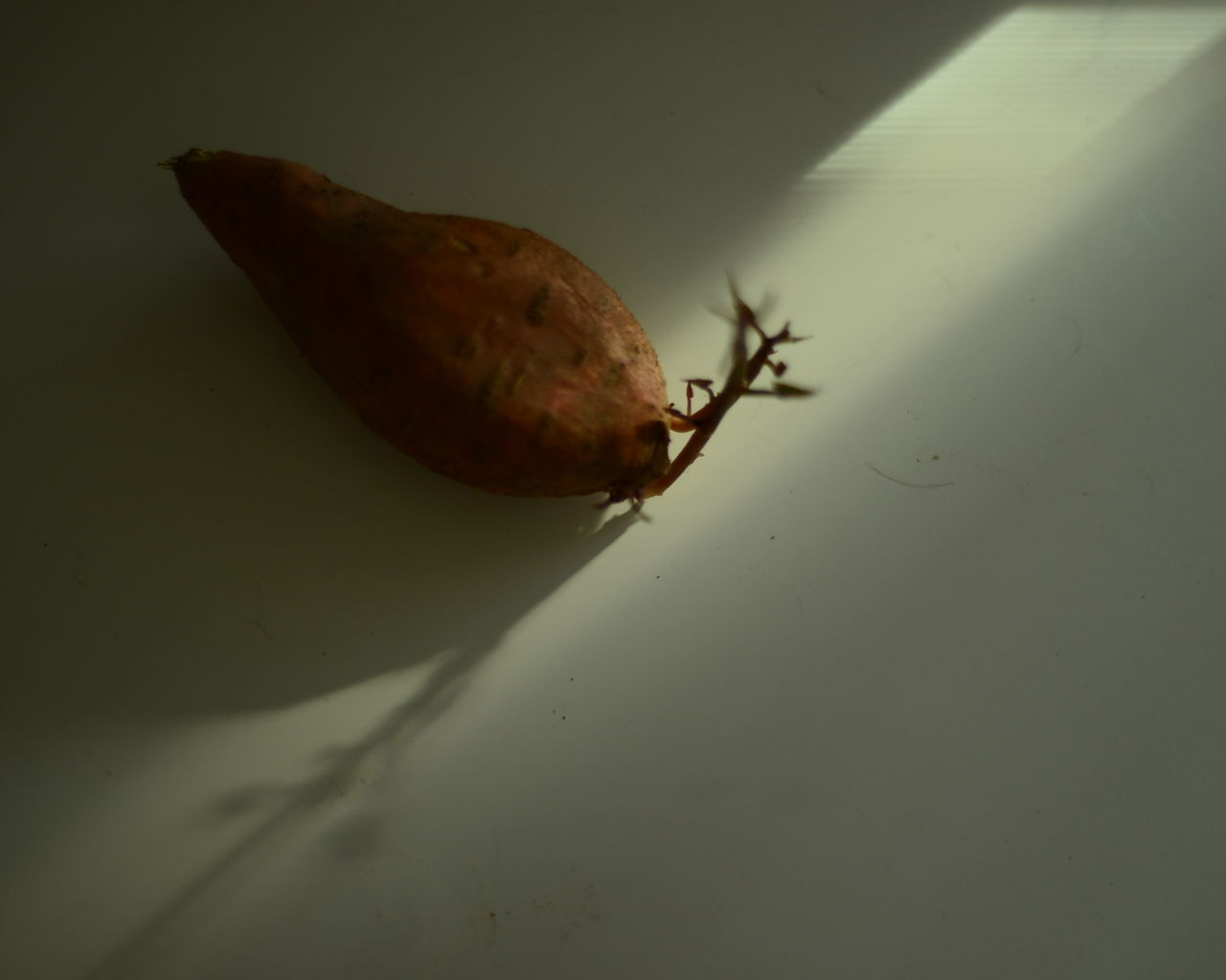 Animal Themes Animals In The Wild Brown Close-up Focus On Foreground Fragility Indoors  Insect Light And Shadow No People One Animal Sweet Potatoes Wildlife Zoology
