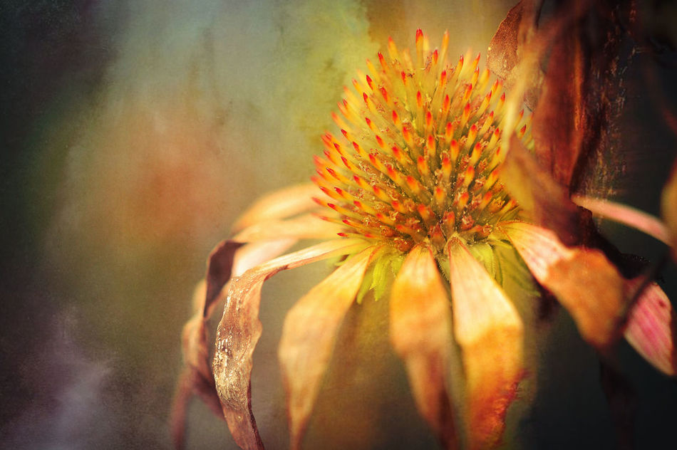 Abstract Blumen Bunt Flower Herbstblüte Nature Schön Sonnenhut Yellow