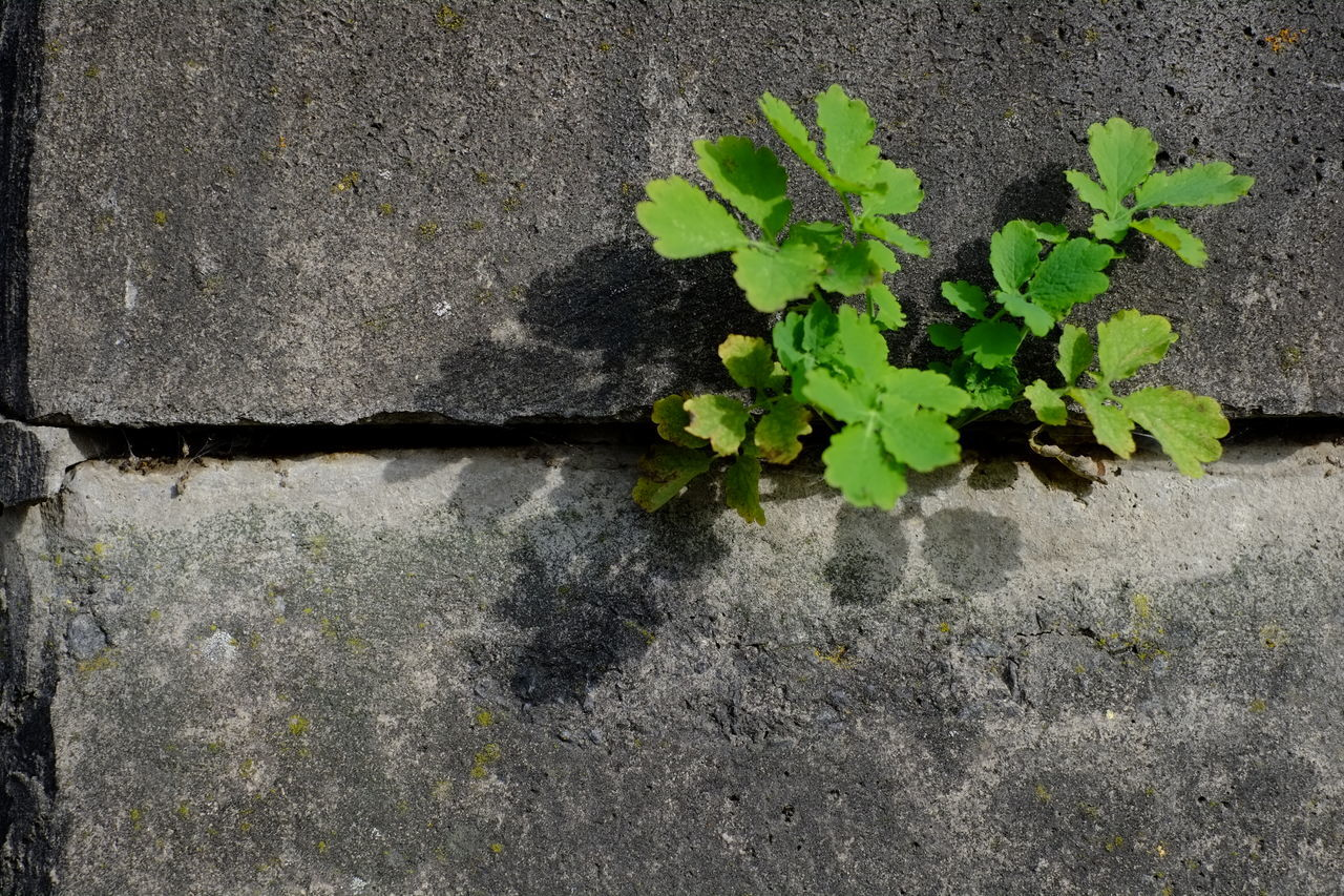 Breaking The Concrete Close-up Concrete Fragility Green Green Color Growth Leaf No People Plant Power Power In Nature