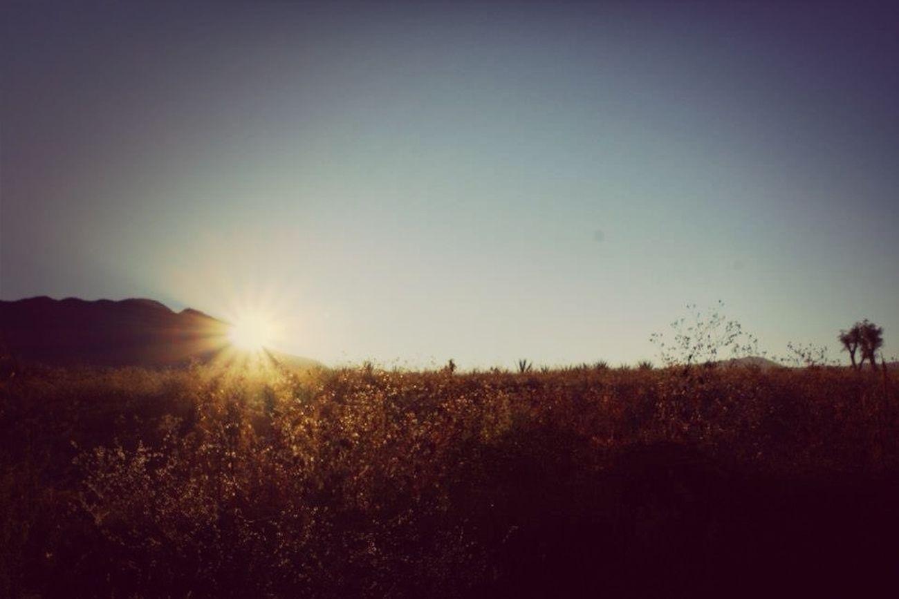 Me he despertado junto el sol. Sus cálidos rayos me abrazaron en esta fría mañana.