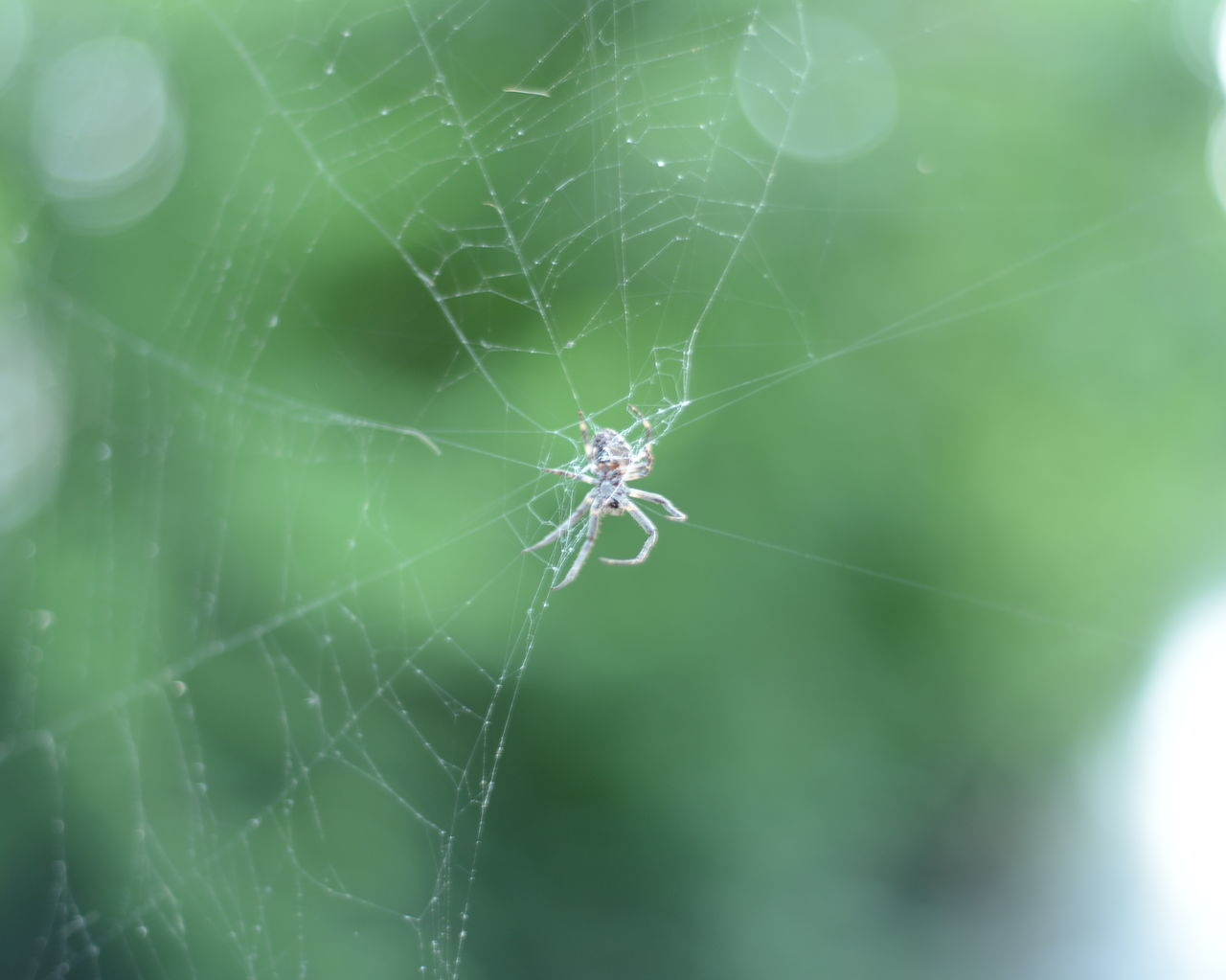 spider web, spider, focus on foreground, one animal, web, close-up, nature, fragility, animal themes, insect, animals in the wild, day, no people, outdoors
