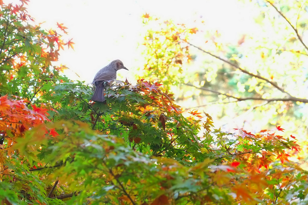 An autumn day Animal Animal Themes Autumnal Tints Beauty In Nature Bird Day Nature No People One Animal Outdoors Perching Songbird  Tree