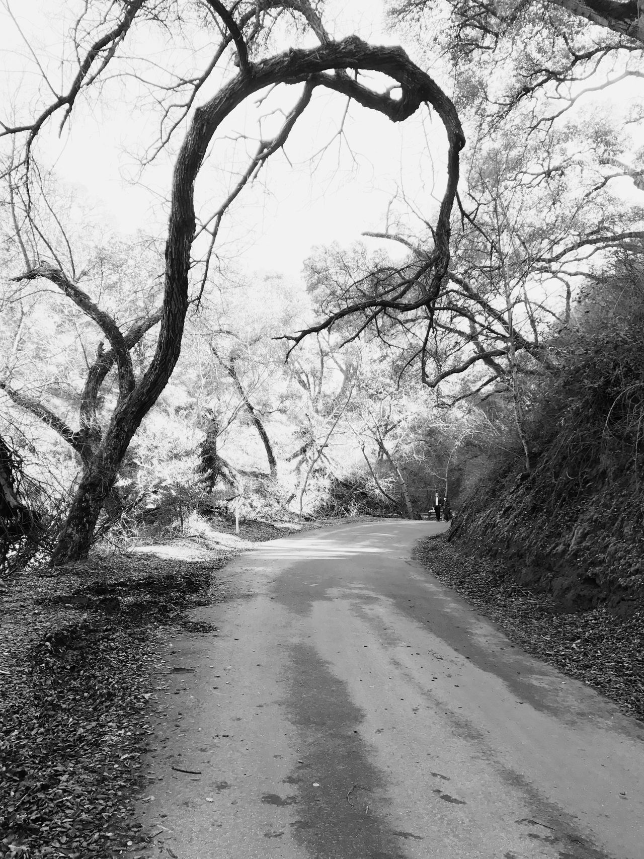 Tree The Way Forward Road Bare Tree Transportation Nature Day Outdoors Branch No People Tranquility Scenics Beauty In Nature Passing Sky