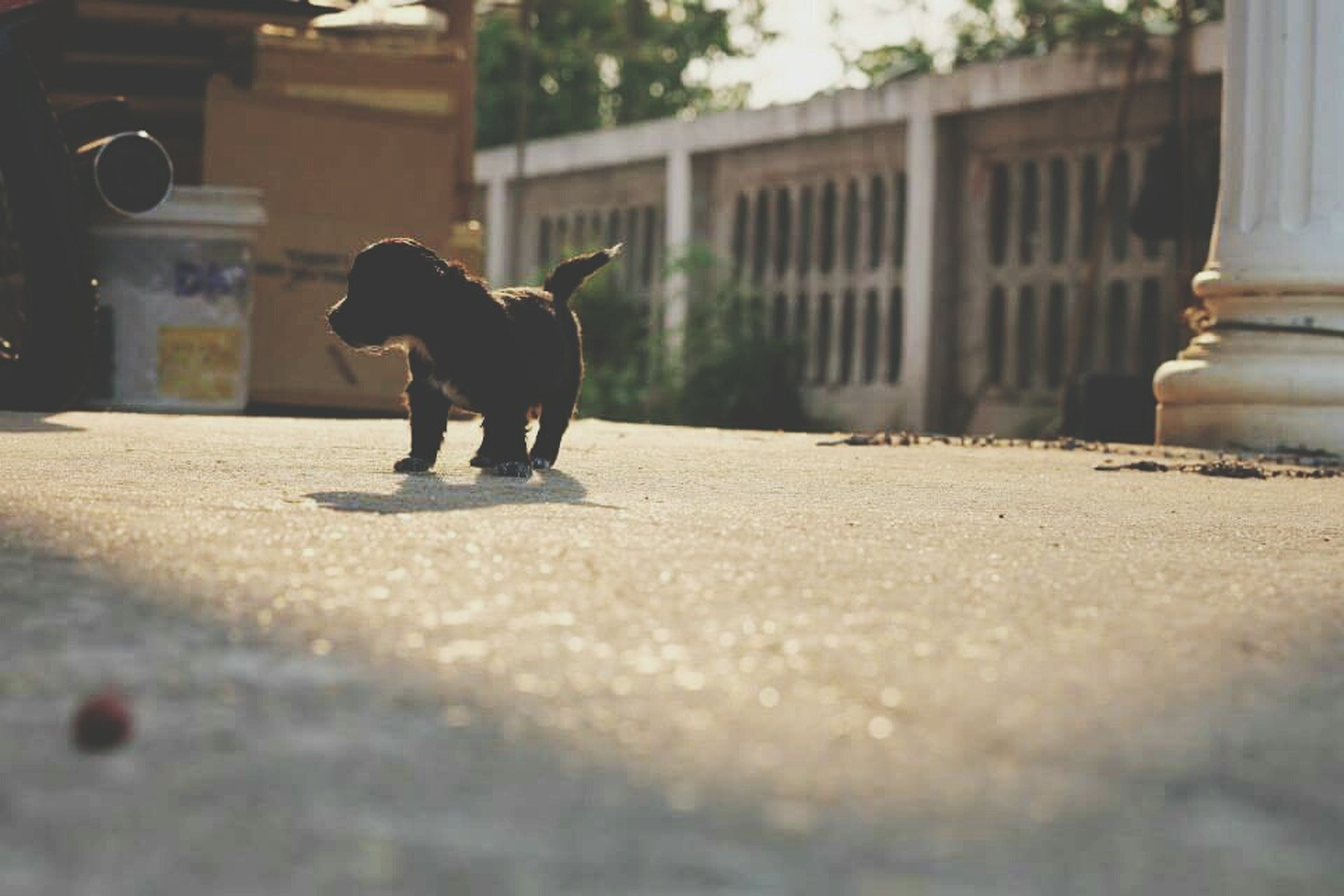 one animal, animal themes, street, dog, building exterior, architecture, built structure, pets, selective focus, surface level, domestic animals, focus on foreground, full length, day, outdoors, mammal, no people, road, sunlight, walking