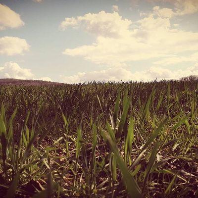 Hastière Belgique Heersurmeuse Paysages Photographie  Photodujour Pics Picofdays Picsofday Herbes Vuedebas Photo Photography Photoday Natuur Nature Flores Flore