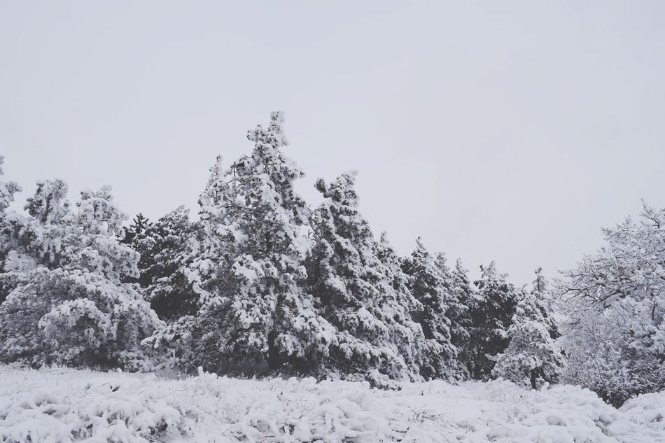 Wintertime Winter Outdoors No People Tree Trees Snow ❄ Snow Snow Time Nature Nature Photography