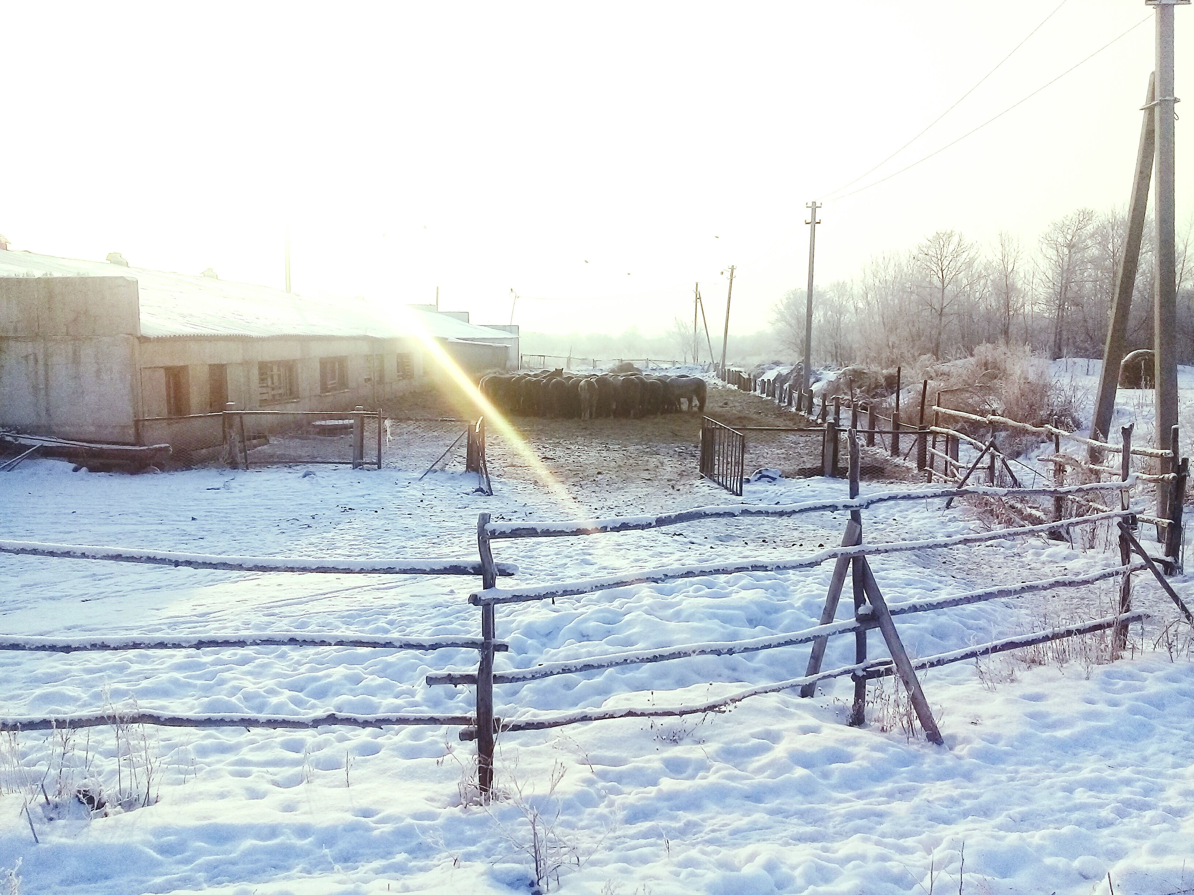 winter, cold temperature, weather, snow, nature, day, outdoors, beauty in nature, no people, sky, tree