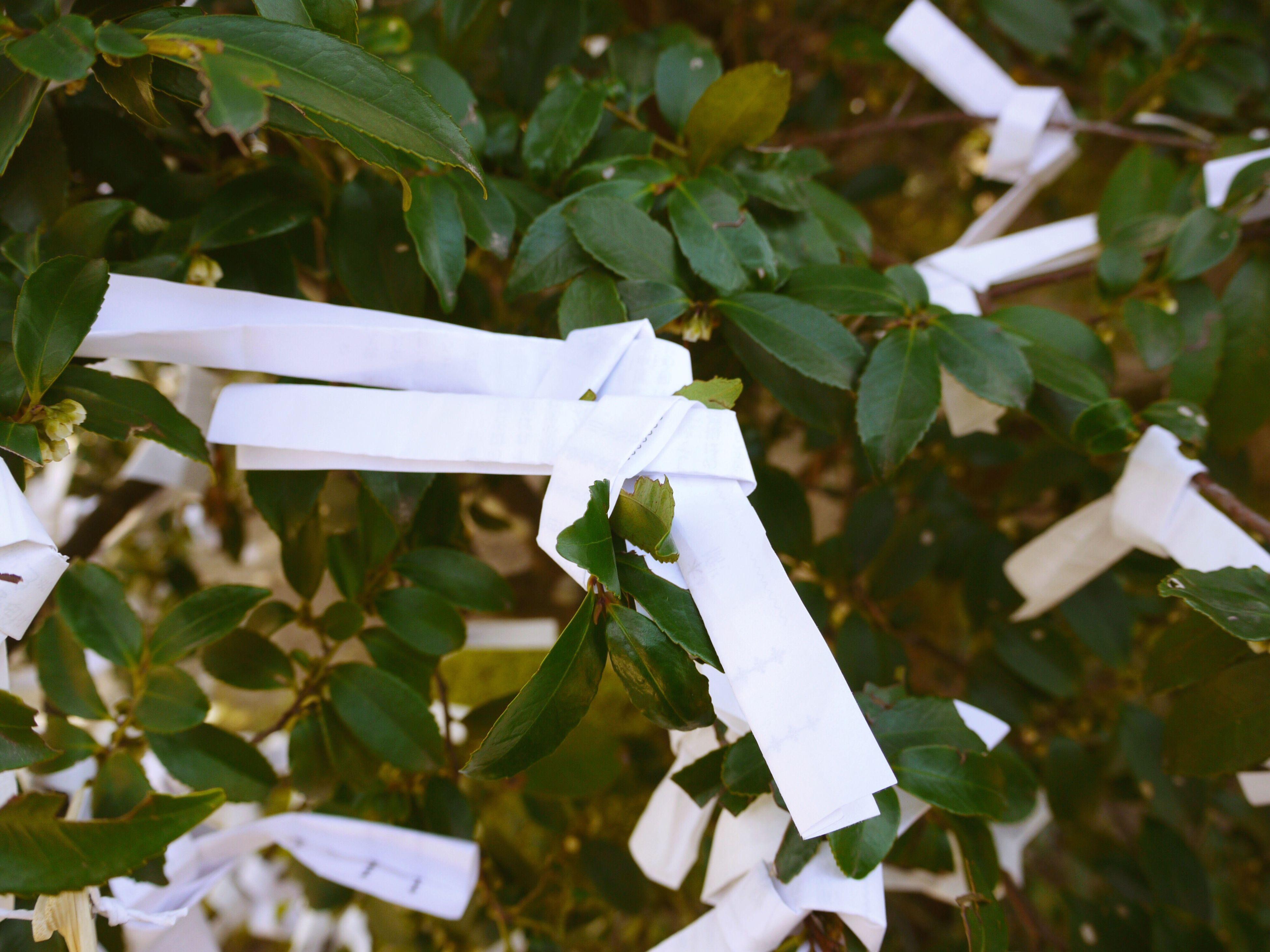 Paper Fortune Omikuji Great Blessing Dai-kichi, 大吉 Small Blessing Shō-kichi, 小吉 💕