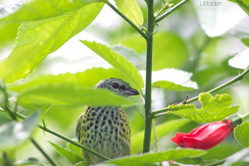 Metro Zoo Peekaboo Birds Nature Trees Peaceful