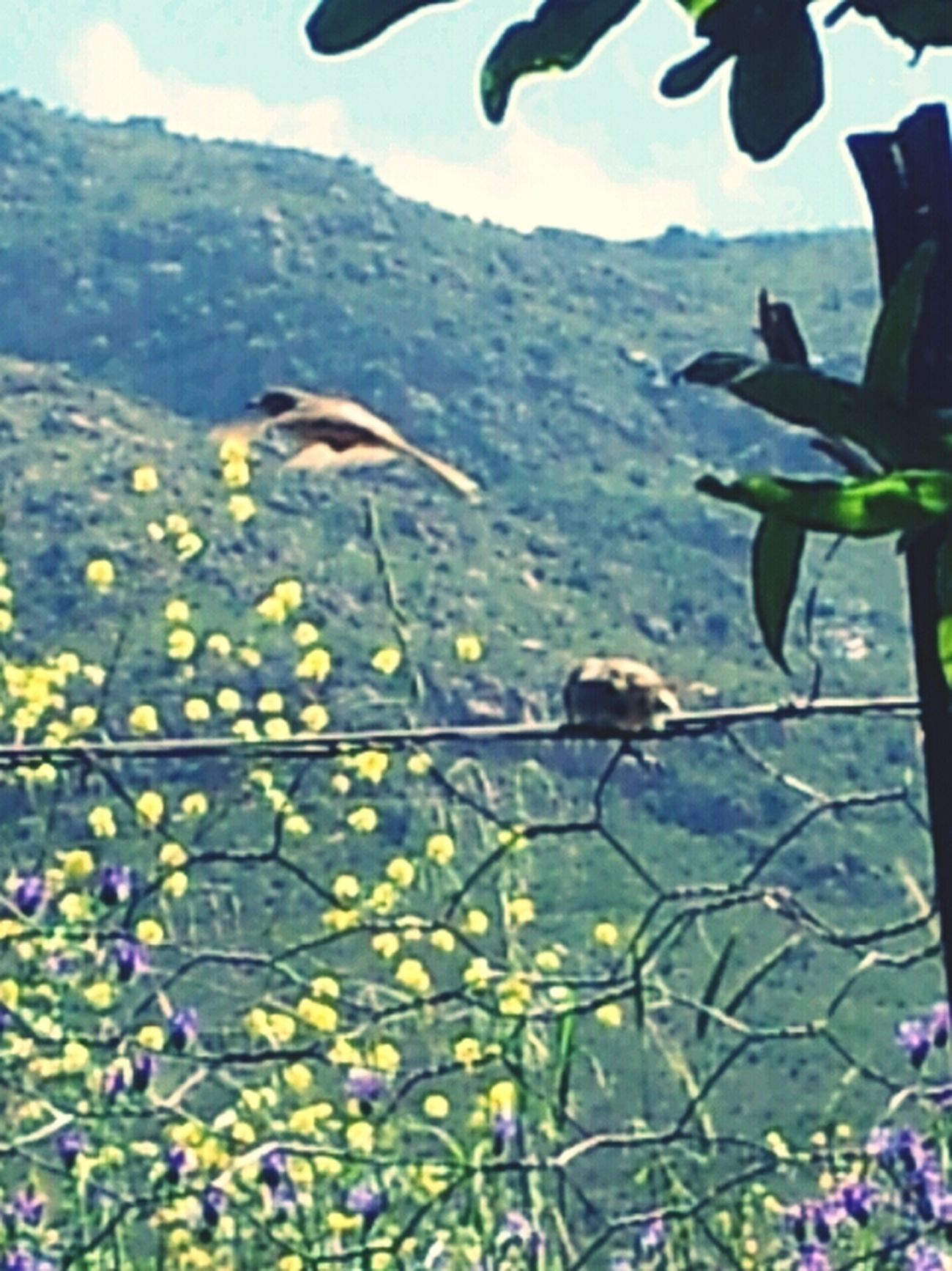 Pretentious nature pic of the day - an enlarged shot of cute li'l birdies.