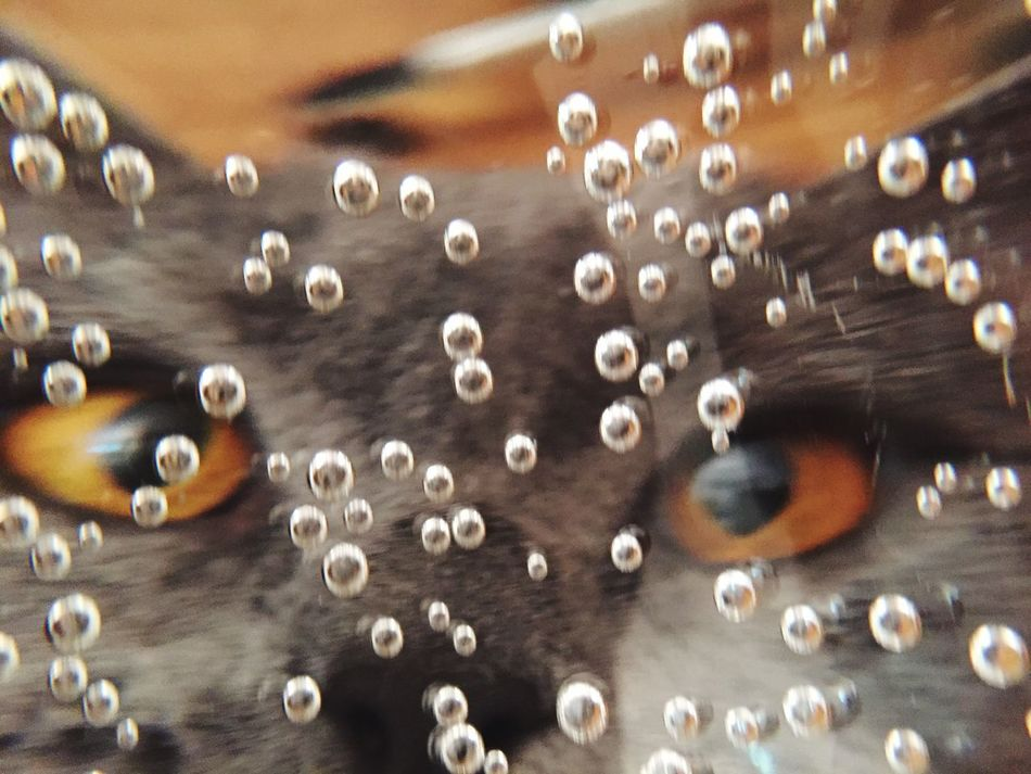 Showcase April Eye EyeEm Best Shots Cat Cats Catsofinstagram Cheese! Pets Bubbles Bubble Bath Sparkling Hello World Mishka One Animal Portrait Pet Funny Faces FUNNY ANIMALS Portraits Cat Lovers The Photojournalist - 2016 EyeEm Awards