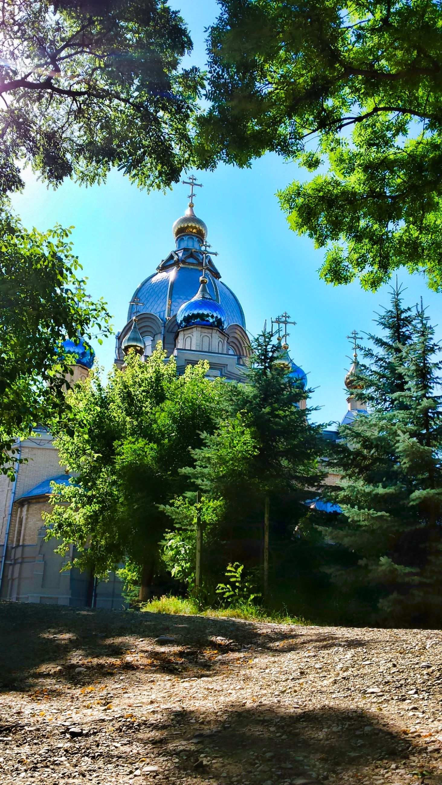 tree, built structure, architecture, building exterior, religion, place of worship, spirituality, church, growth, dome, clear sky, green color, sunlight, low angle view, branch, day, blue, sky