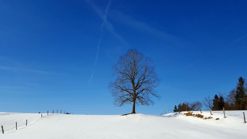 lonley tree on the hill Tree Blue Nature Sky No People Snow Clear Sky Cold Temperature Outdoors Single Tree Day Winter Germany Sachsenkam Landscape Miles Away