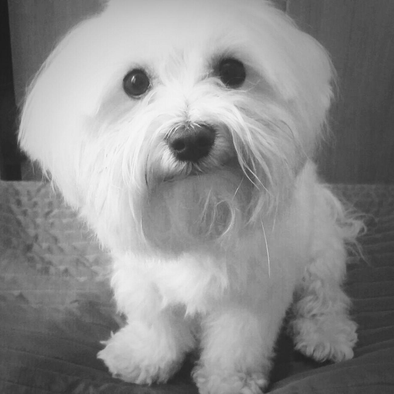 My dear Teddy) Dog Very Nice Dog:) Black & White Animal