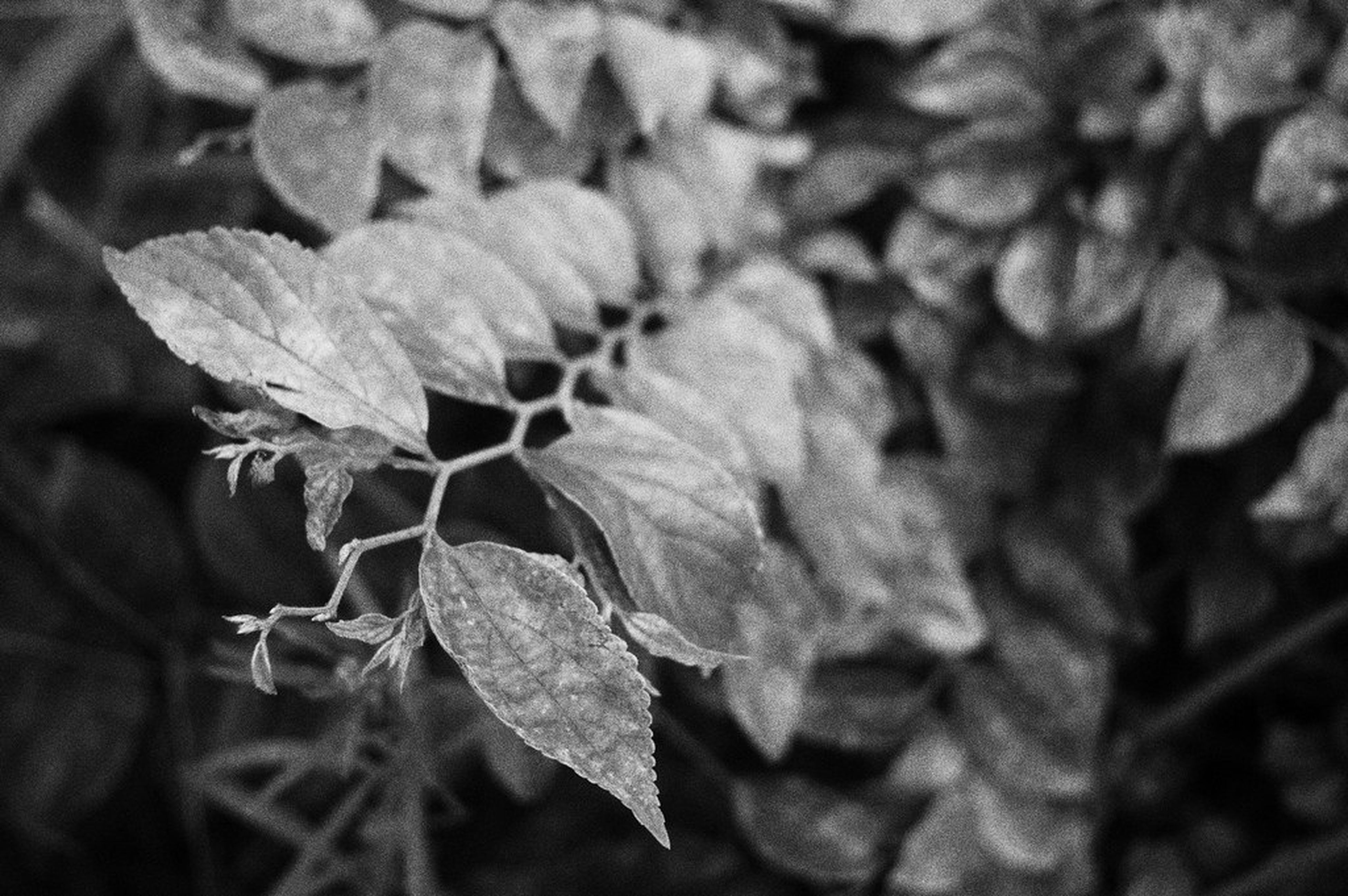 leaf, close-up, growth, plant, leaf vein, leaves, nature, natural pattern, selective focus, day, focus on foreground, branch, outdoors, beauty in nature, fragility, botany, green color, green, full frame