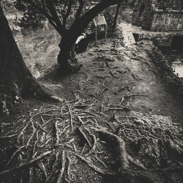 Beauty In Nature Blackandwhite Close-up Cong Connacht Day Forest Ground Growth Ireland Lines Nature No People Noir Outdoors Roots Roots Of Tree Tranquility Tree