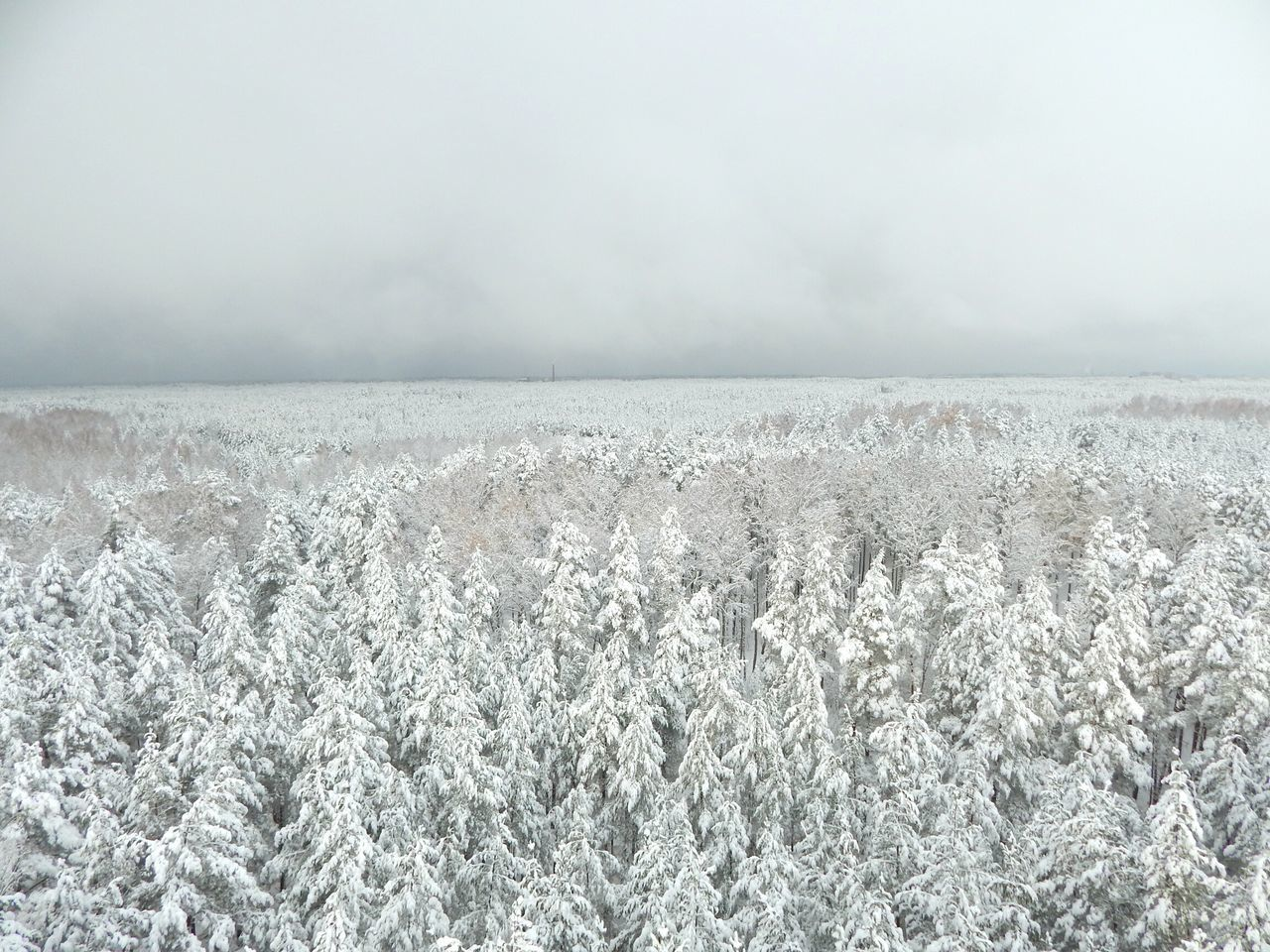 Nature Gray Non-urban Scene Textured  Sparse Plant Outdoors Freshness No People Day Close-up Sky Frosted Glass View From Above Forest Point Of View Riga Latvia View PointWinter Snow Cloud - Sky View Tower Tree