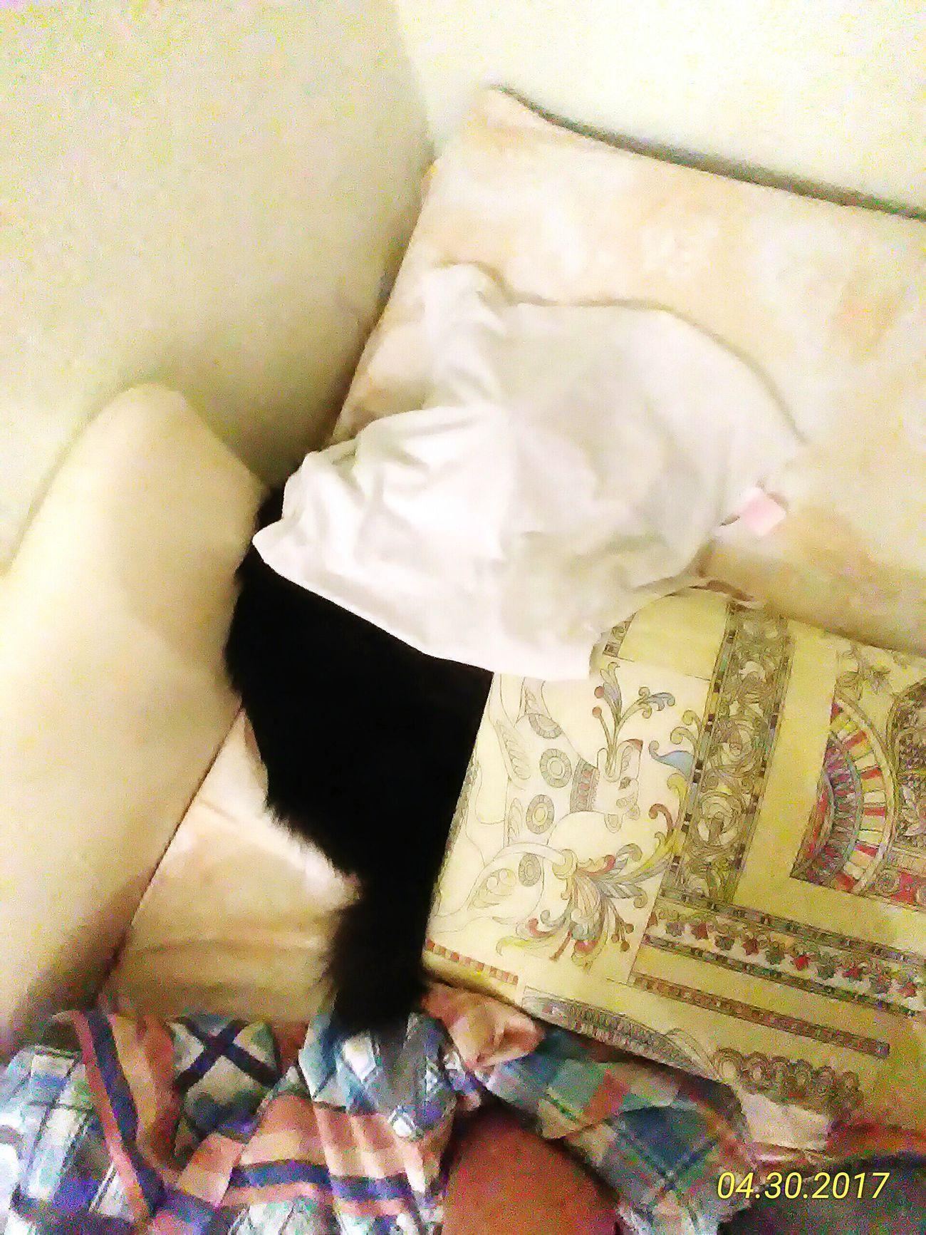 котик❤️ спит под майкой