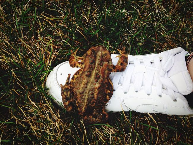 Frog Toad Grass Nike March 2016 instagram: @8.Lbs