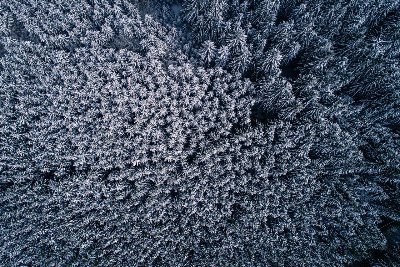 A really nice picture from a snow covered forest in April near my home. Aerial Photography Aerial Shot Aerial View April Backgrounds Beauty In Nature Cold Temperature Day Drone  Flying High Forest Nature No People Snow Snowflake Spruce Tree Textured  Top Down Tree Trees Winter Art Is Everywhere The Great Outdoors - 2017 EyeEm Awards