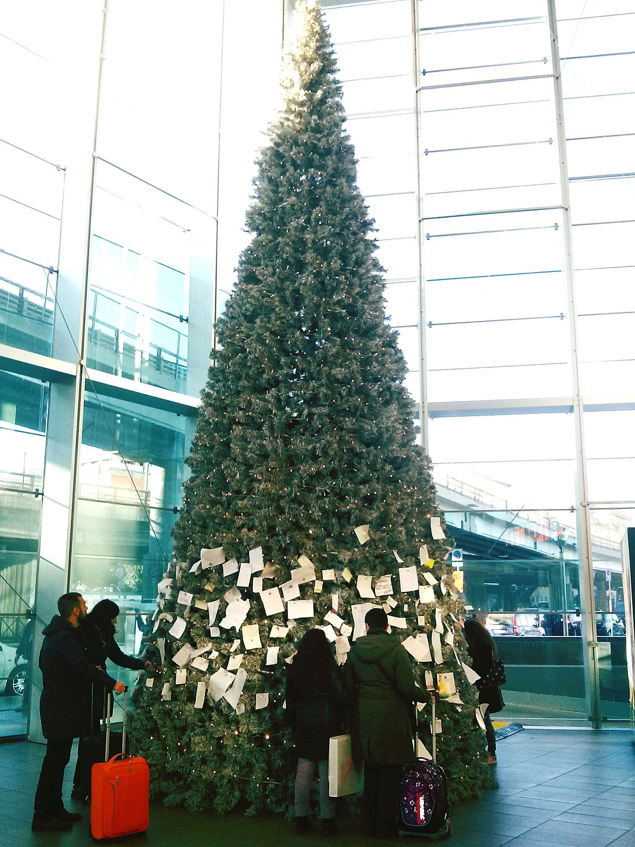 Stazione Tiburtina Chrismas Tree Chrismastime Showcase: December Walking Taking Photos