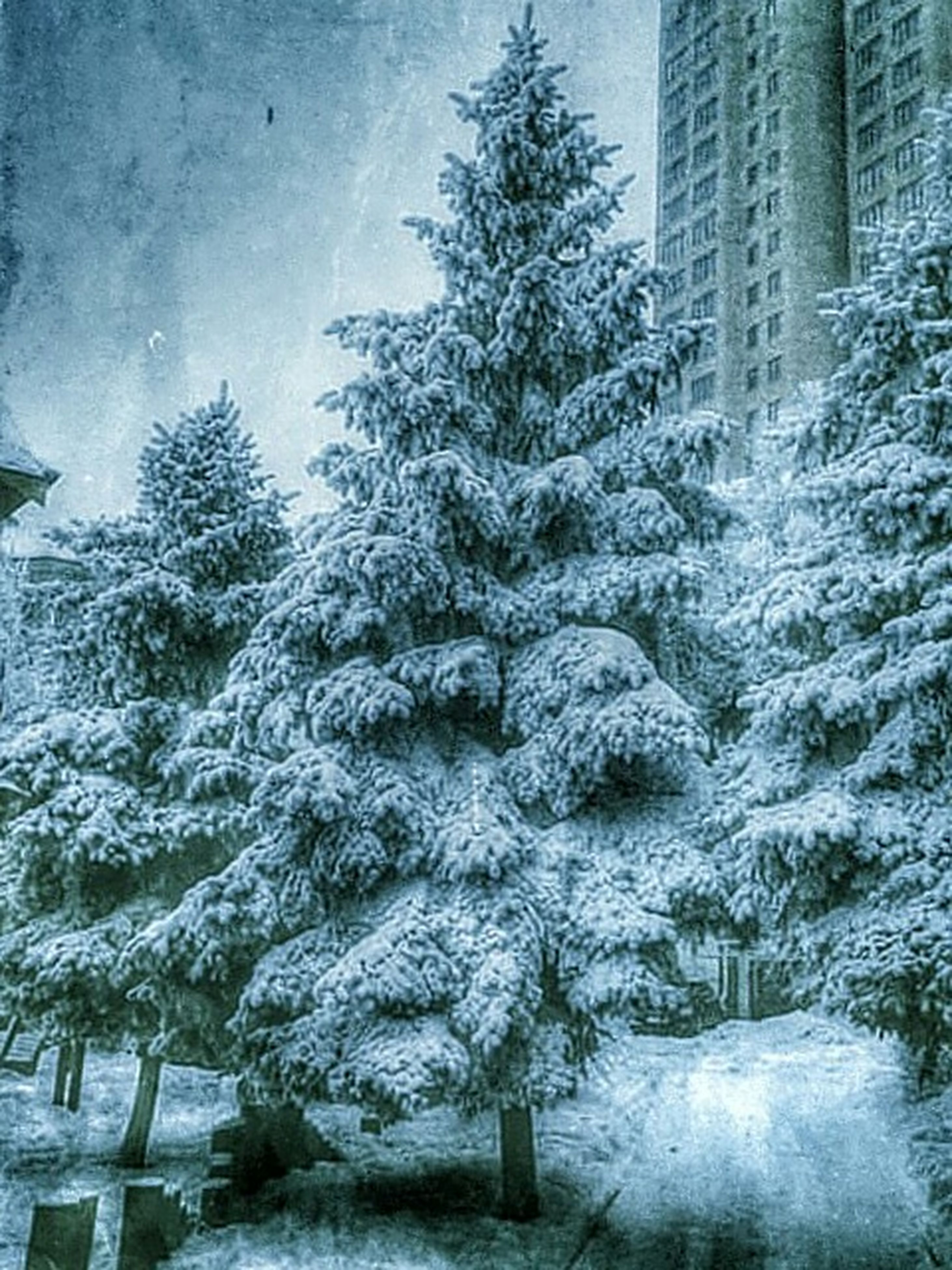 snow, winter, cold temperature, season, weather, covering, tree, frozen, building exterior, bare tree, covered, architecture, built structure, nature, white color, tranquility, day, branch, outdoors, field