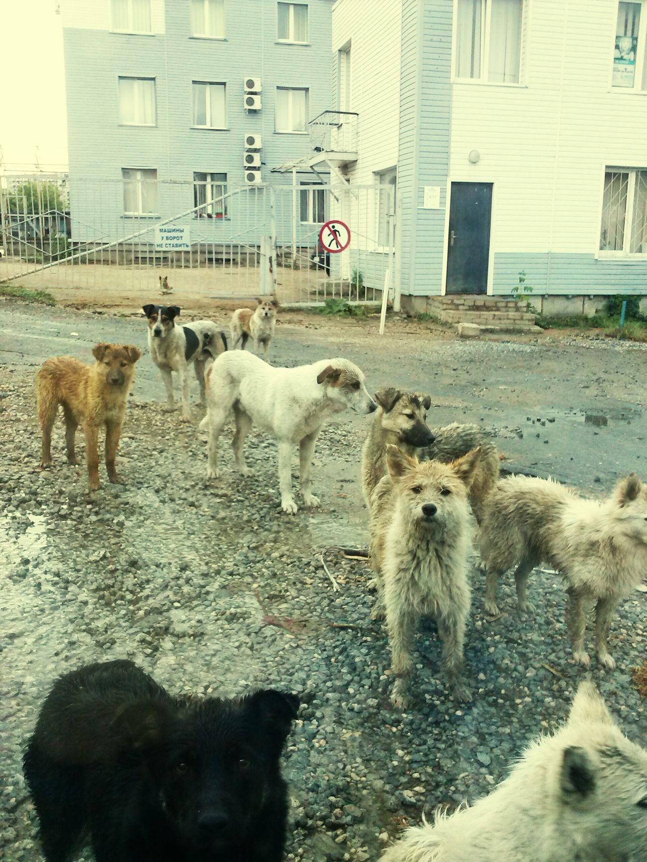 Dogs Homeless Sad City Nofood