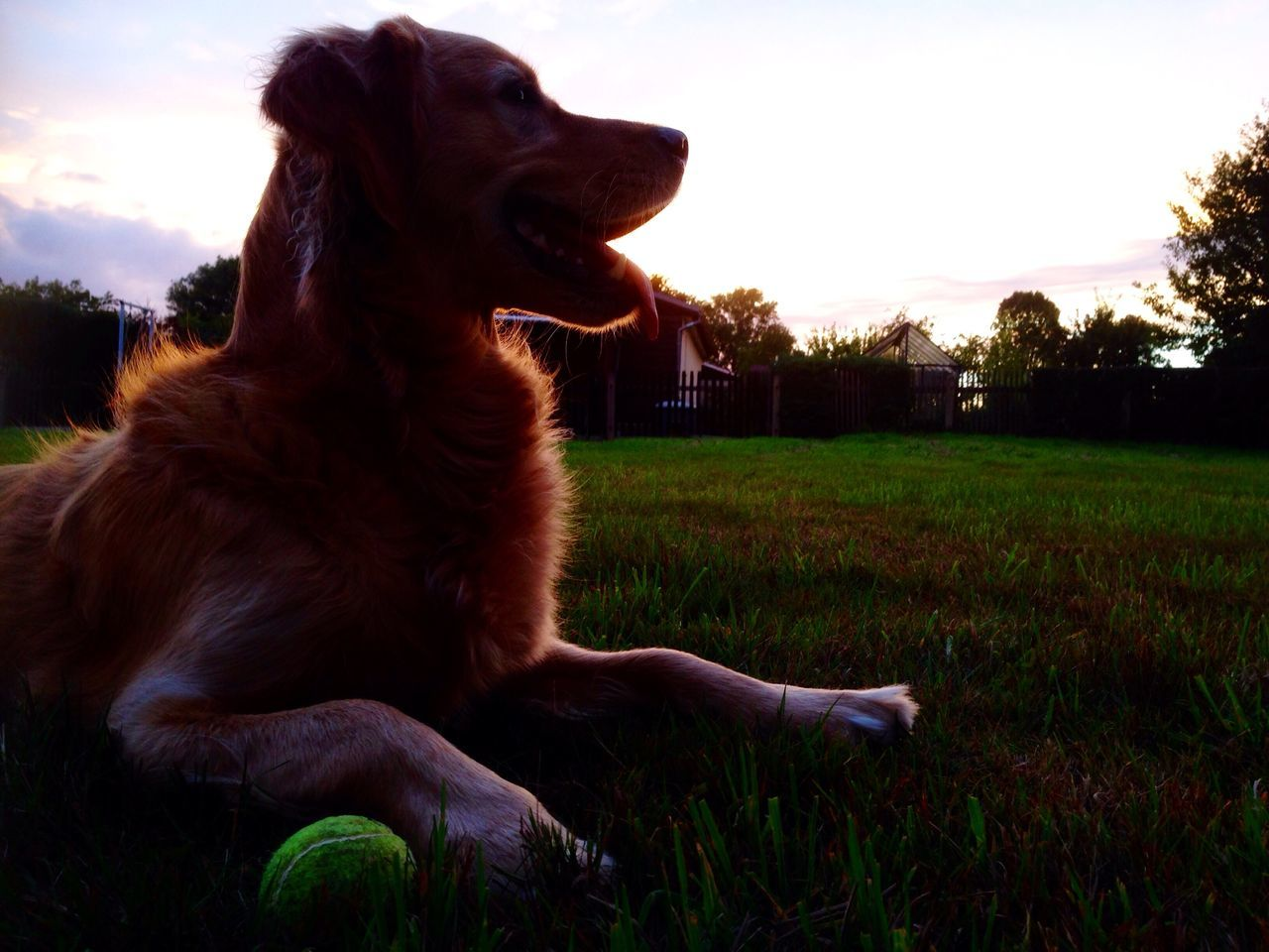Sunset Sonnenuntergang Dog❤ Yellow Ball Hundespaziergang Silhouetten Leuchtend Evening Abends