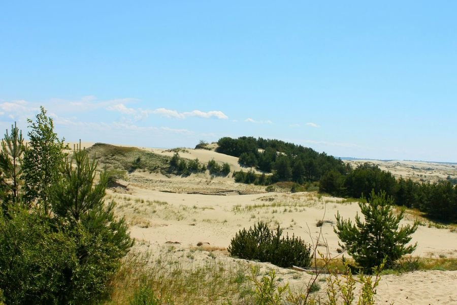 Sand Nature Landscape Baltic Coast Beach Clear Sky No People Sand Dune Outdoors Sky Day Beauty In Nature Beautiful Day Awesome_view Relaxing Moments Hello World Still Life