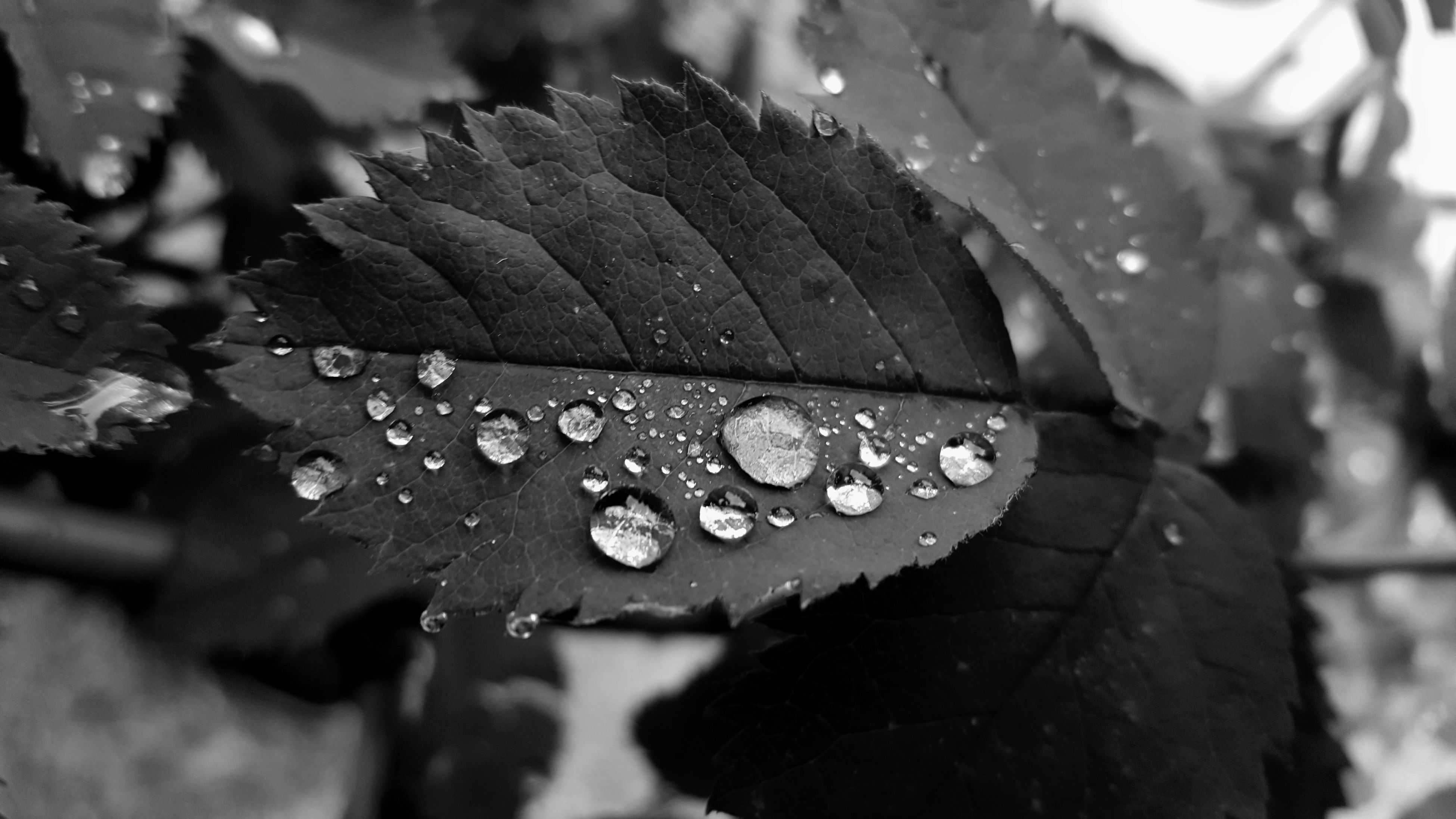 leaf, drop, water, wet, close-up, nature, day, raindrop, fragility, no people, outdoors, freshness, beauty in nature