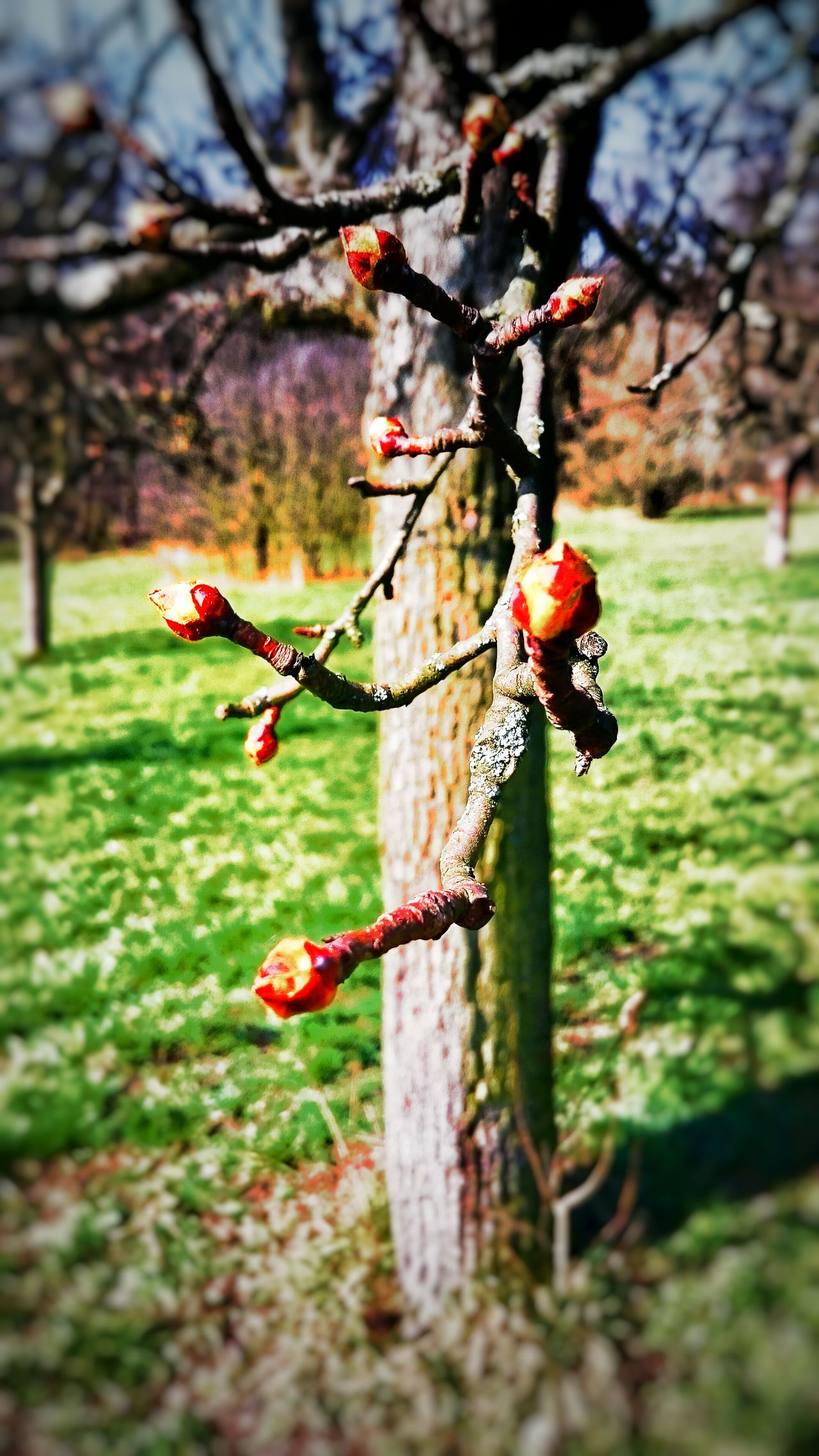 EyeEm Best Shots - Nature EyeEm Nature Lover Enjoying Life Knospen Knospe Spring Springtime Frühling Wood Holz Holzstamm Holz Kunst WoodArt Wood Art Hanging Out Relaxing Baum Baum 🌳🌲 Baum Ohne Laub Baumblütenfest Baum & Zeit Hello World Taking Photos Check This Out