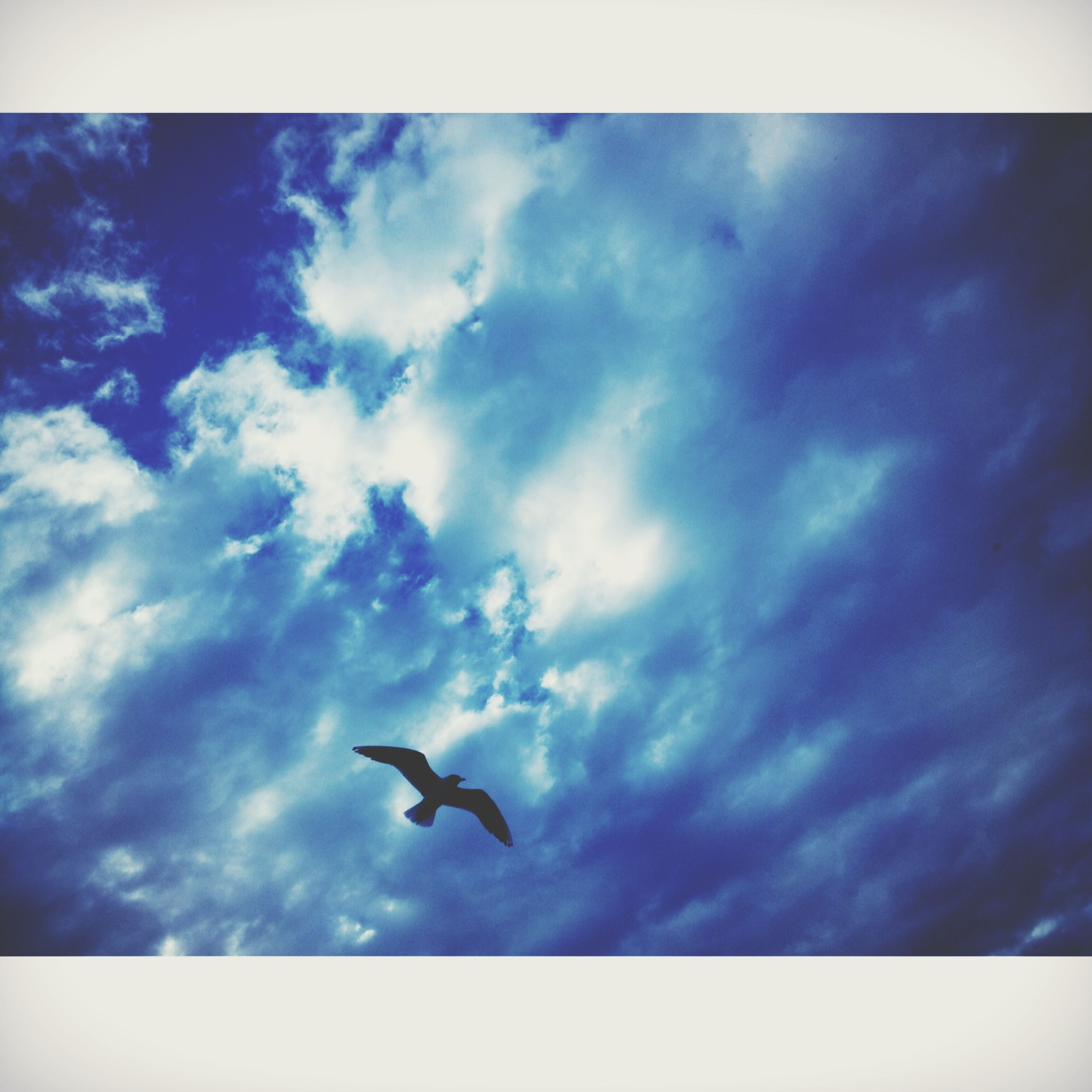 bird, animal themes, animals in the wild, wildlife, flying, low angle view, sky, spread wings, one animal, mid-air, cloud - sky, seagull, nature, cloud, zoology, silhouette, motion, blue, outdoors, no people
